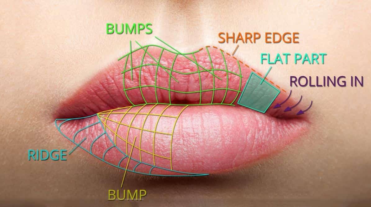 Esthetique Genève - proportion des lèvres